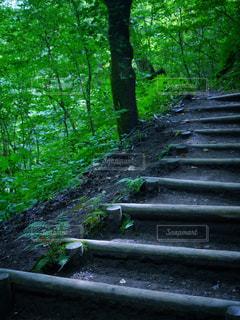 森林の隣に座っている木製のベンチの写真・画像素材[949955]