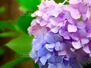 近くの花のアップの写真・画像素材[950025]
