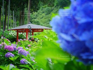 近くのフラワー ガーデンの写真・画像素材[950026]