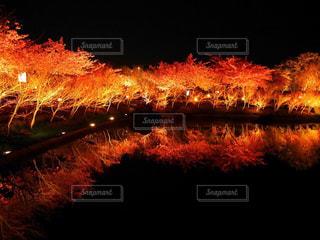 空に花火の写真・画像素材[956440]
