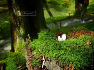 草の上に座っている鳥カバー フォレストの写真・画像素材[958687]