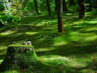 近くの緑豊かな緑の森の写真・画像素材[958689]