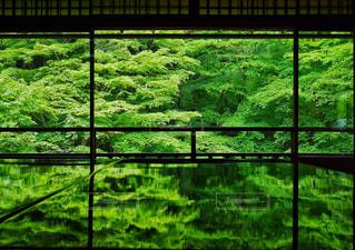 緑豊かな緑のフィールドの表示の写真・画像素材[958690]