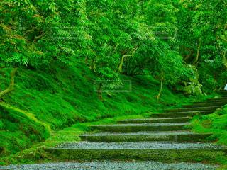 近くに緑豊かな緑のフィールドのの写真・画像素材[958693]