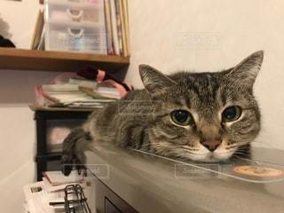 温まる猫の写真・画像素材[1078170]