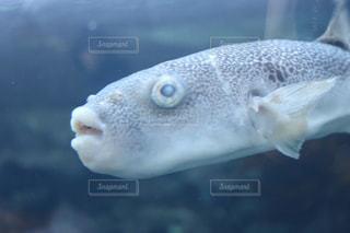 近くに魚のアップの写真・画像素材[951449]