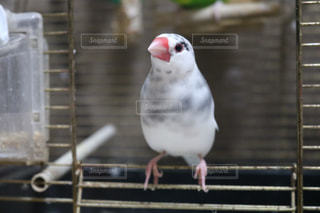 手すりの上に座って小さな白い鳥の写真・画像素材[980620]