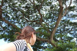 木の隣に立っている女性の写真・画像素材[1193765]
