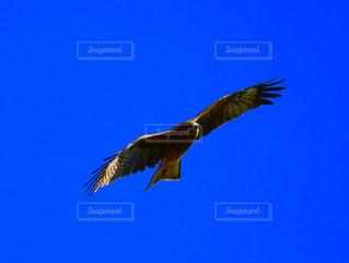 空を飛んでいる鳥の写真・画像素材[1592081]