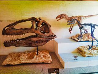 恐竜の化石の写真・画像素材[1782841]