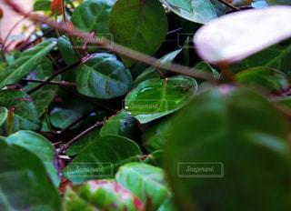 近くの植物のアップの写真・画像素材[1218899]