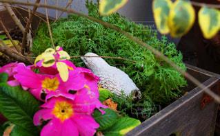 鳥と花の写真・画像素材[1234927]
