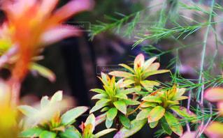 近くの植物のアップの写真・画像素材[1234930]