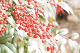 近くの花のアップ - No.948045