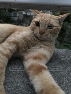 地面に横になっている猫 - No.948008