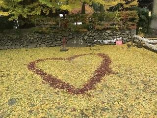 落ち葉のハートの写真・画像素材[1123801]