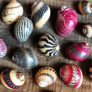 美しい貝殻の写真・画像素材[950434]