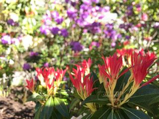 植物の花の花瓶 - No.949057
