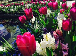 近くの花のアップ - No.949117