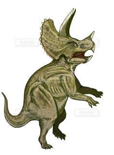 トリケラトプスの写真・画像素材[948657]
