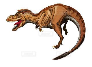 ティラノサウルスの写真・画像素材[948658]