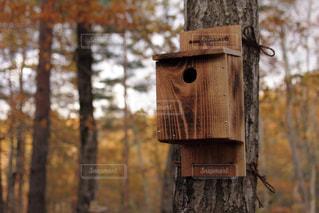 森の巣箱の写真・画像素材[948889]