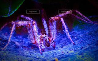 大蜘蛛の写真・画像素材[949204]
