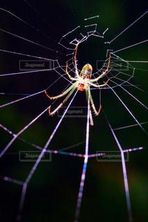 蜘蛛の巣の写真・画像素材[949205]