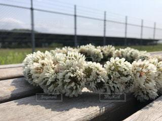 花のクローズアップの写真・画像素材[3459315]