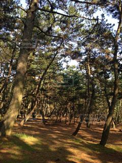 林の木漏れ日の写真・画像素材[953920]