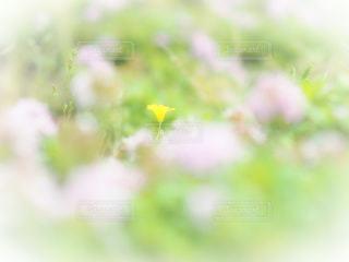 置かれた場所で咲いた花の写真・画像素材[951194]