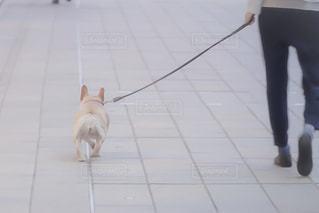 散歩 - No.960601