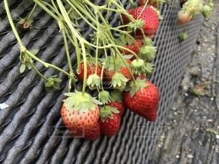 果物の一部 - No.1012562