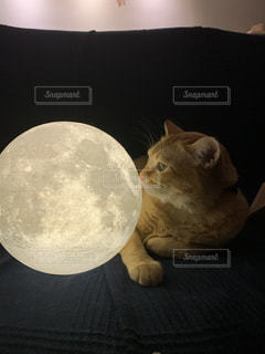 猫と月の写真・画像素材[2887045]