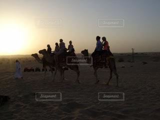 ドバイでラクダの写真・画像素材[2090117]