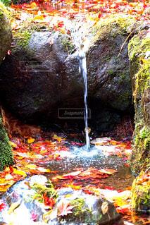 森の中の小さな滝 - No.952154