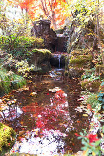 木々 に囲まれた滝の写真・画像素材[952156]