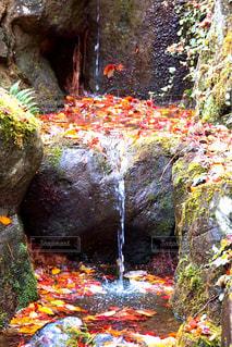 森の中の大きな滝 - No.952159