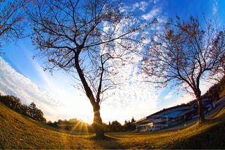 背景の山と木 - No.952168