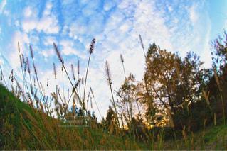 草の中に立っている鳥の写真・画像素材[952170]