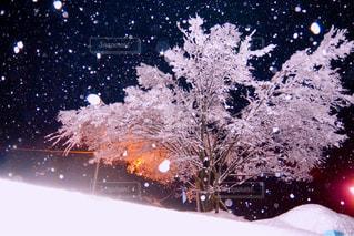 雪の中での花火の写真・画像素材[952172]