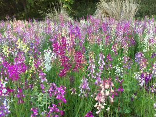 色とりどりの花の写真・画像素材[950858]