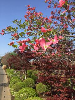 花咲くの写真・画像素材[951470]