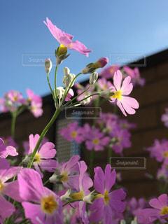 近くの花のアップの写真・画像素材[957875]