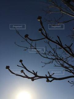 春を待つの写真・画像素材[957878]