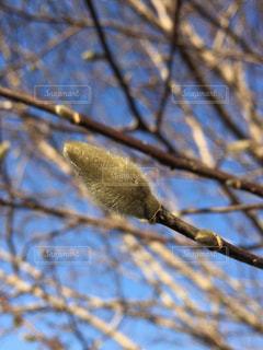 春を待つの写真・画像素材[957883]