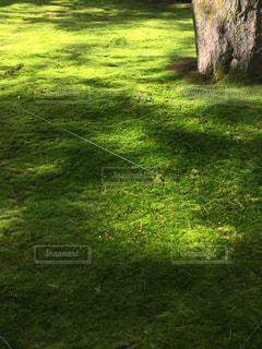 苔むす庭の写真・画像素材[957959]