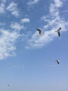 空を飛んでいるカモメの群れの写真・画像素材[957960]
