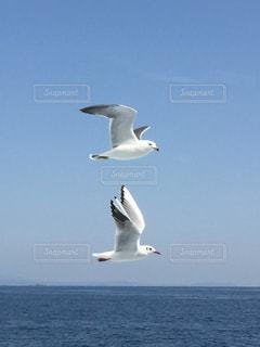 飛んでいる鳥の写真・画像素材[957961]