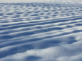 雪の覆われた畑の写真・画像素材[975079]